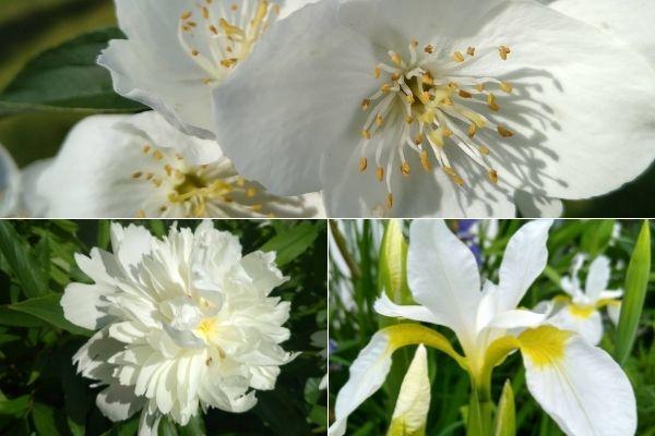 Co w ogrodzie kwitnie w czerwcu