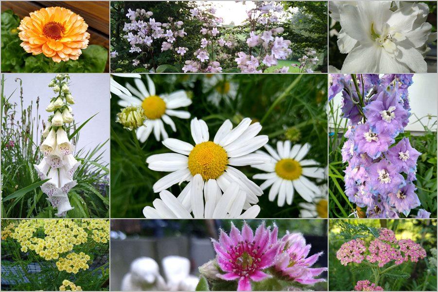 kwiaty kwitnące w czerwcu