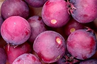 owoce świdośliwy