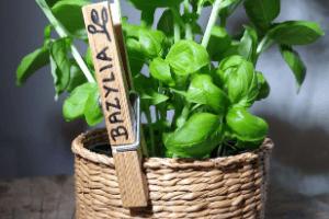 Znaczniki do roślin