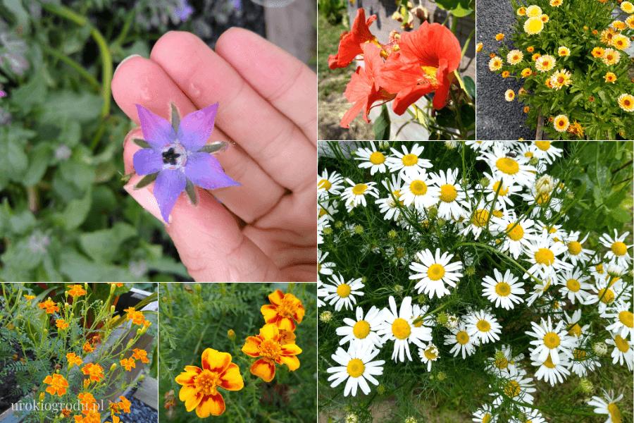 Jakie kwiaty chronią warzywa